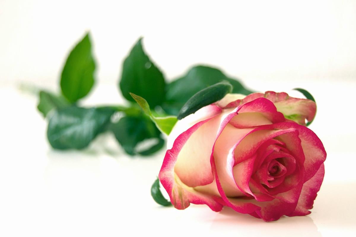 Galateo dei fiori, il fiore giusto da regalare in ogni occasione